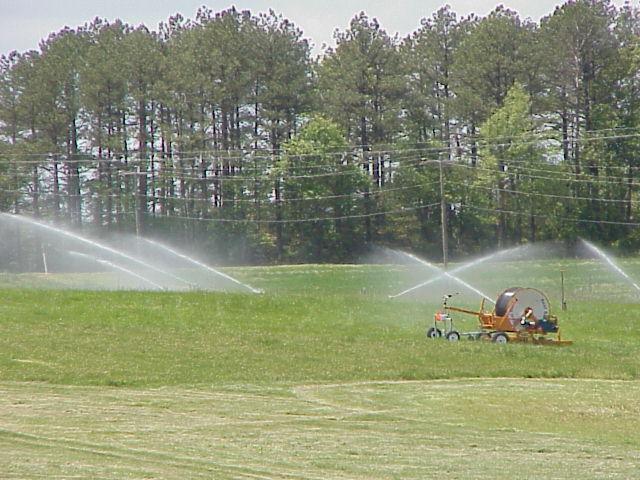 Swine Effluent Irrigation